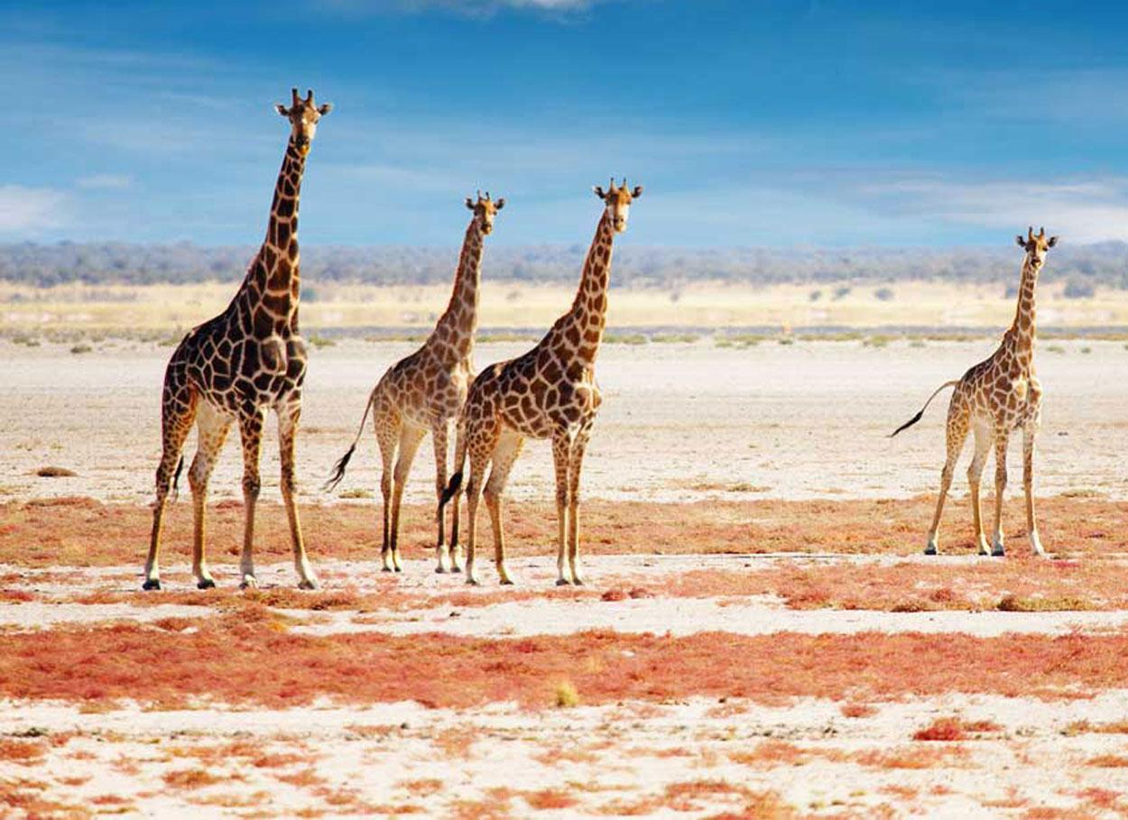 Il viaggio di nozze in Madagascar