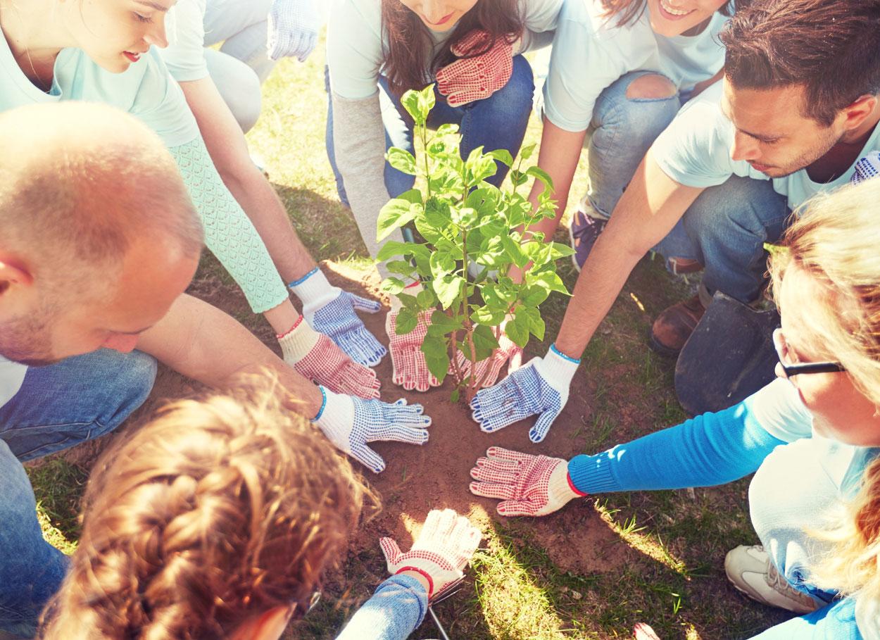 Lo speciale rito dell'albero della vita